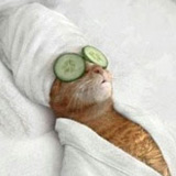 picture of a pampered cat with cucumbers on his eyes